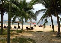 海滩度假胜地椰树林