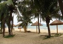 海滩椰树林