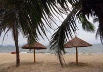 夏日海滩椰树