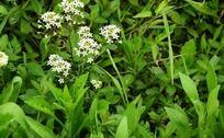 绿草丛中的清新白色小花