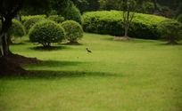 生态清新的绿树和草地