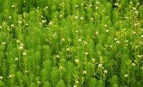 开满花朵的翠绿水草丛