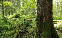 长白山森林风光