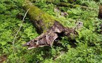 长白山原始森林