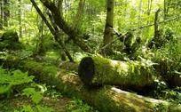 长白山原始森林风景