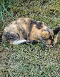 猫咪睡觉了