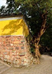 天童寺百年香樟