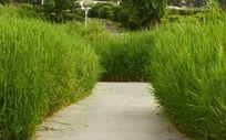 绿色草丛间小路
