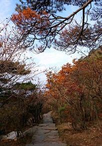 黄山山路秋景