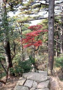 黄山树林间山路