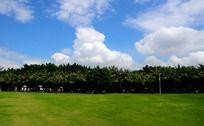天空白云椰林草地