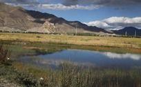 西藏高原沼泽水草