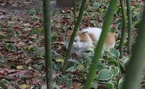 在竹林里休息的小花猫