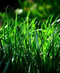 美丽的草丛