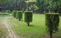 中大校园里草地绿树