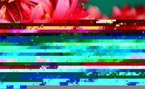 艳红色沾满水珠的菊花