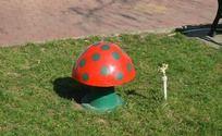草地上的蘑菇