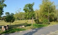 公园里的树林