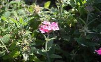 娇艳的红花