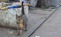 炯炯有神的小猫