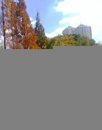 水边的芦苇树丛