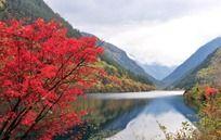 九寨沟犀牛海红枫叶