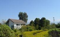 蓝天下的草丛