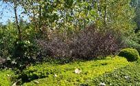 树林间的草丛