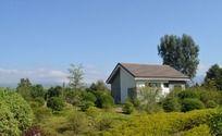 草丛中小屋