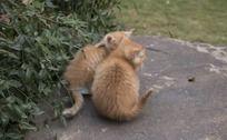小猫的背影