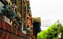 铁栏杆上的花朵和藤条
