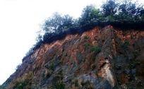 崖壁上的绿色植被