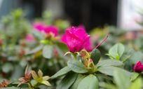 开放的花朵