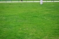 翠绿的草地