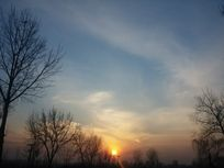 夕阳下的树木
