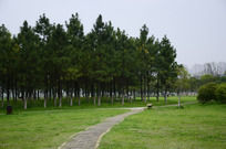 葱郁的树林和草地