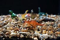 沙石中的恐龙玩具