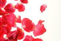 红色花瓣高清大图