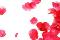 红色花瓣高清拍摄
