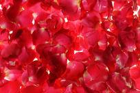 铺满画面的红色花瓣