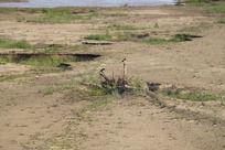 长满嫩草的黄河滩