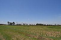 蓝天下的田地