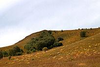 生长在山坡上的树