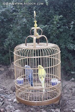 笼中两只鸟