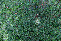 绿色的草地