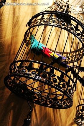 鸟笼里的鸟