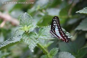 叶片上的蝴蝶