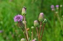 近摄植物花卉
