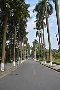 华南农业大学校园小道