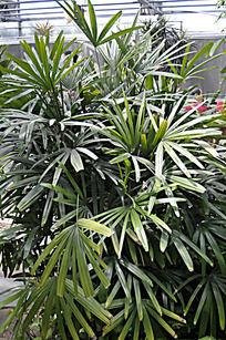 北京植物园里的绿植